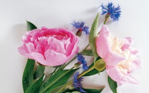 """Peonies and their meaning"""
