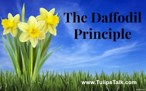"""Tulips Talk The daffodil principle"""